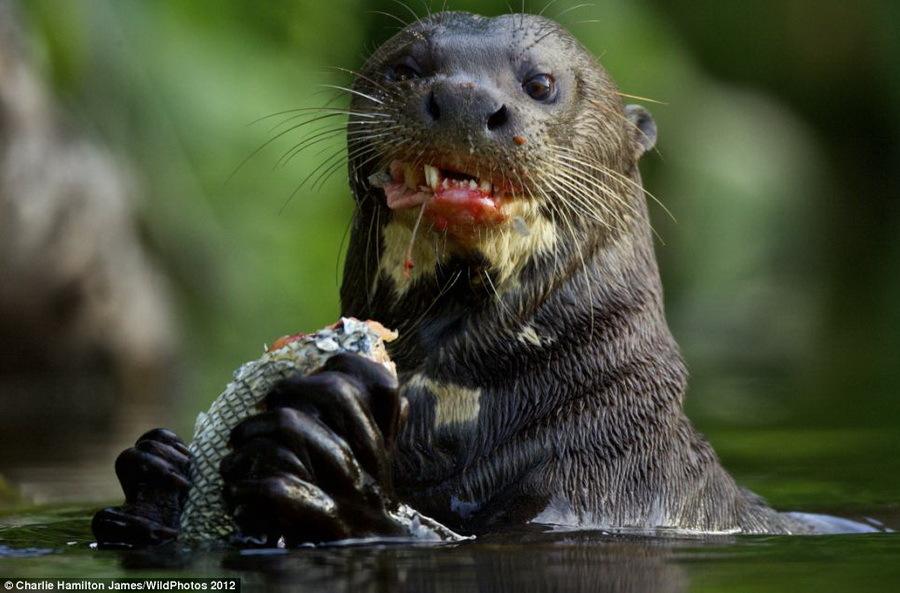 2012英国野生动物摄影大赛美图欣赏(组图)