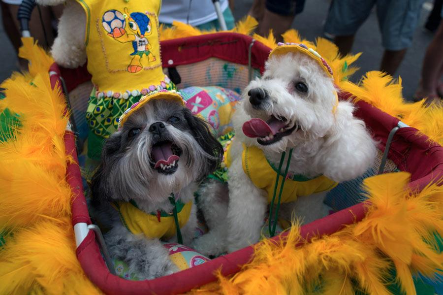 狗狗 帕卡/2月3日,在巴西里约热内卢的科帕卡巴纳海滩,两只身着狂欢节...