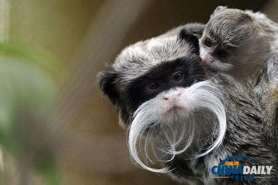 母亲节组图:动物的温暖母子情