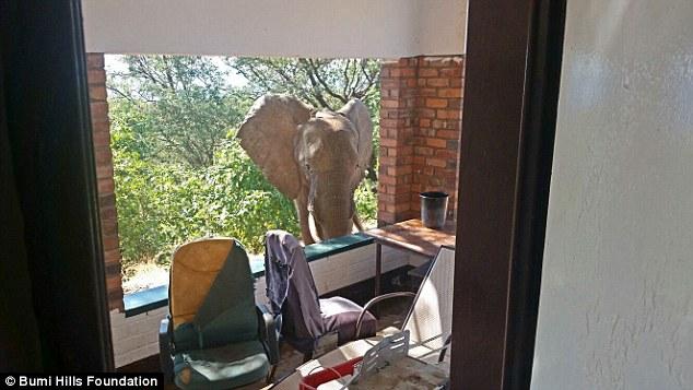 酒店大象折法图解